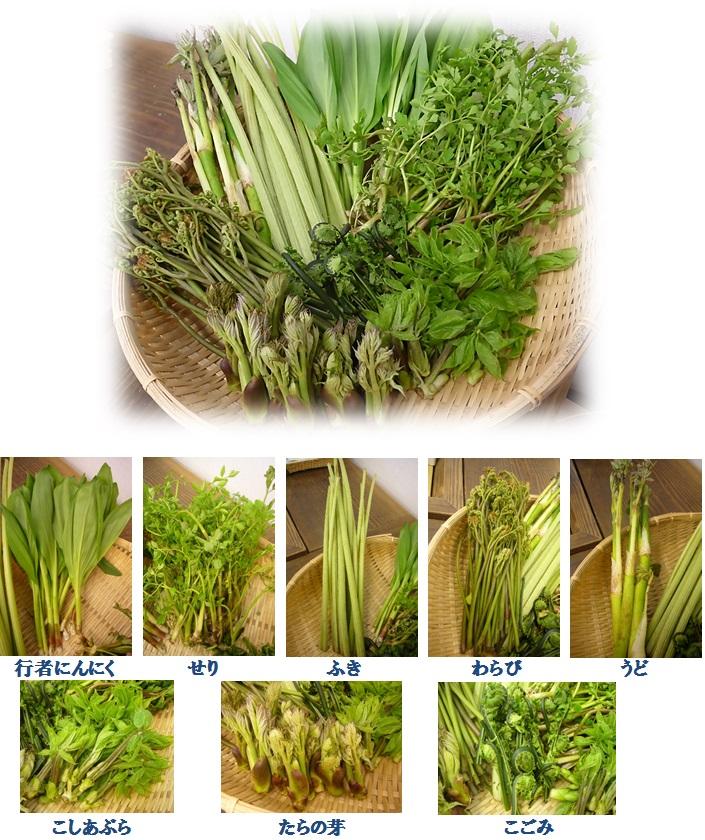 山菜,産直市場ヤマサン,タラの芽,こごみ,行者にんにく,こごみ,わらび,うど,せり