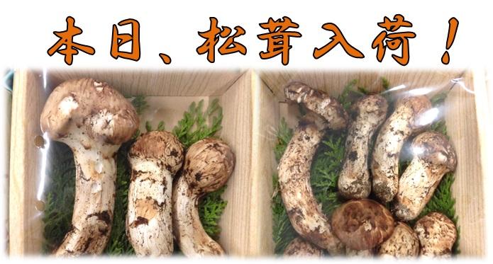 松茸,長野,産直,産直市場山ヤマサン