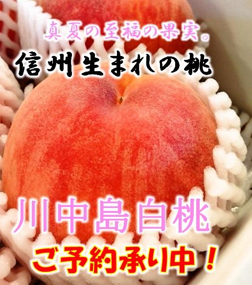館中島白桃,白桃,お中元,産直市場ヤマサン