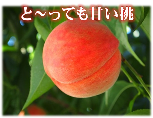 桃,川中島白桃,甘い,長野県