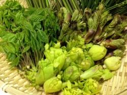 山菜,タラの芽,こしあぶら,こごみ,うど