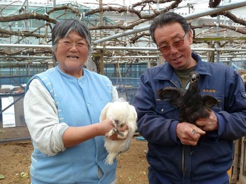 烏骨鶏卵,児玉農園,卵かけ,ご飯